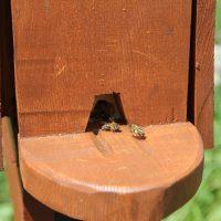 IHSE Biotop: Bienenschaukasten