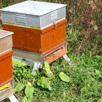 IHSE Biotop: Bienenstöcke