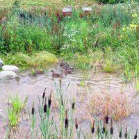 IHSE Biotop: Naturteich